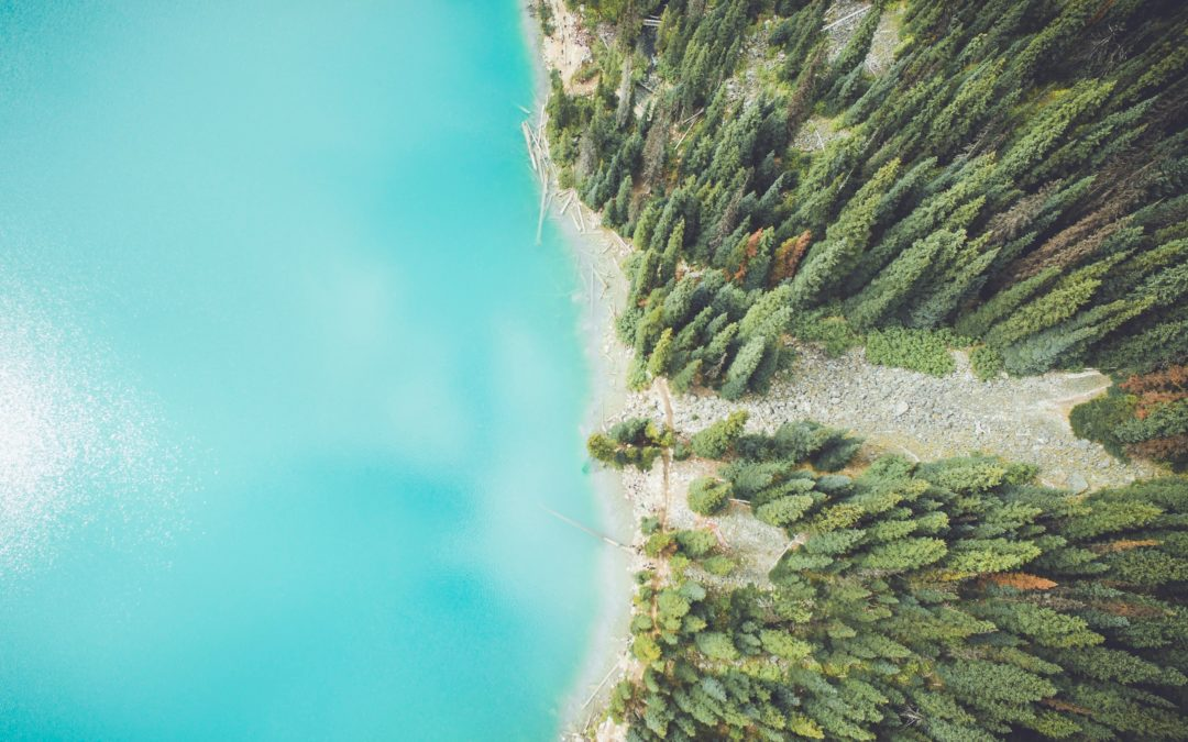 How To Guide On Creating Evergreen Content